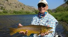 prime-brown-trout-on-spruce-moth-big-hole-river